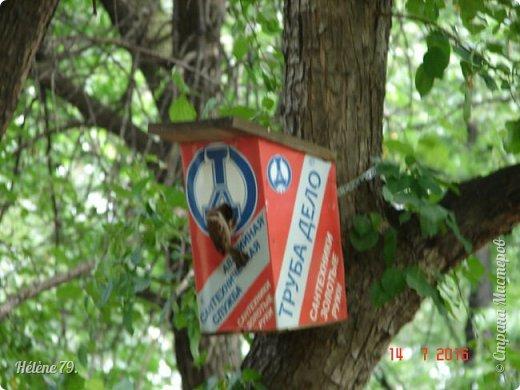 Добрый день, дорогие жители СМ! Приглашаю ВАС продолжить нашу прогулку по старому уютному саду. фото 5