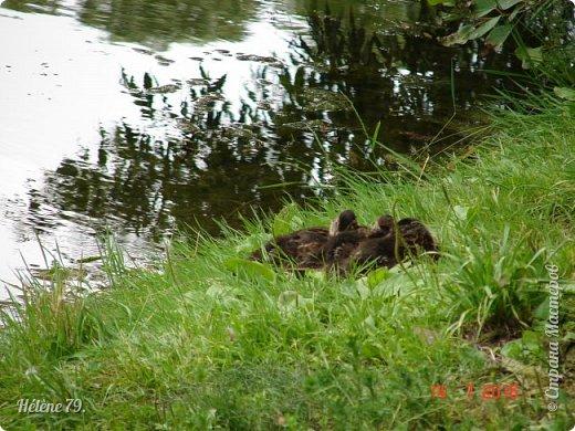 Добрый день, дорогие жители СМ! Приглашаю ВАС продолжить нашу прогулку по старому уютному саду. фото 14