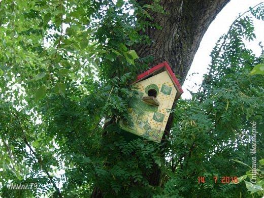 Добрый день, дорогие жители СМ! Приглашаю ВАС продолжить нашу прогулку по старому уютному саду. фото 7