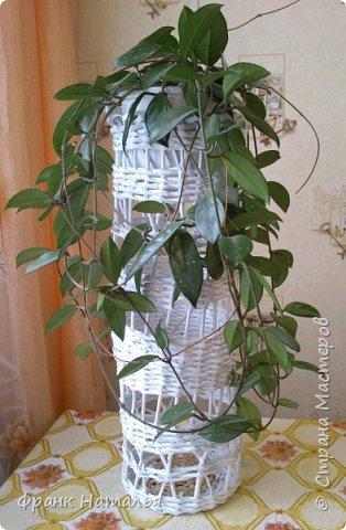 Для этого шикарного растения решила сплести вазу. Сейчас это украшение интерьера квартиры. Все гости в восторге.