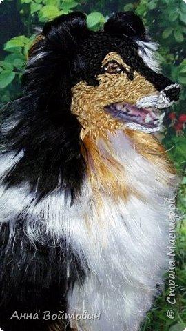 Собачка породы Шелти. Вышивка лентами. фото 3