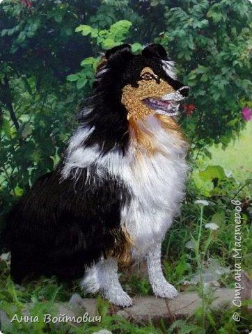 Собачка породы Шелти. Вышивка лентами. фото 5
