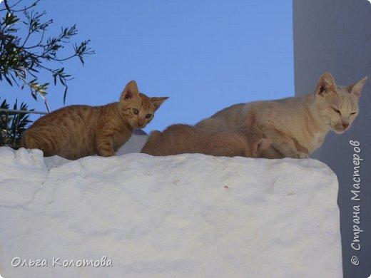Шесть лет назад, в 2010 г., я тоже а экскурсии на острове Сими. И в монастыре Панормитис встретила кошку с двумя котятами. фото 1