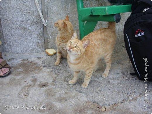 Шесть лет назад, в 2010 г., я тоже а экскурсии на острове Сими. И в монастыре Панормитис встретила кошку с двумя котятами. фото 2
