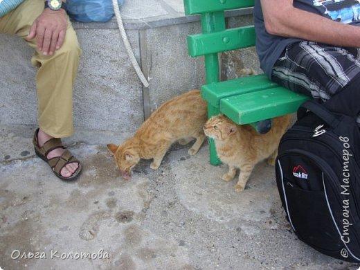 Шесть лет назад, в 2010 г., я тоже а экскурсии на острове Сими. И в монастыре Панормитис встретила кошку с двумя котятами. фото 3