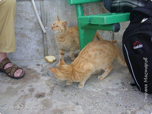 Шесть лет назад, в 2010 г., я тоже а экскурсии на острове Сими. И в монастыре Панормитис встретила кошку с двумя котятами. фото 4
