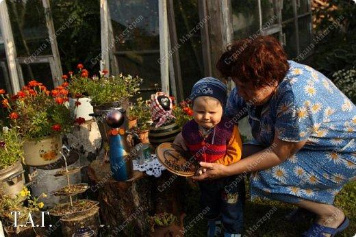 Познакомьтесь с новоселами моего участка.  Муха Цокотуха и бабушка Пчела. фото 22
