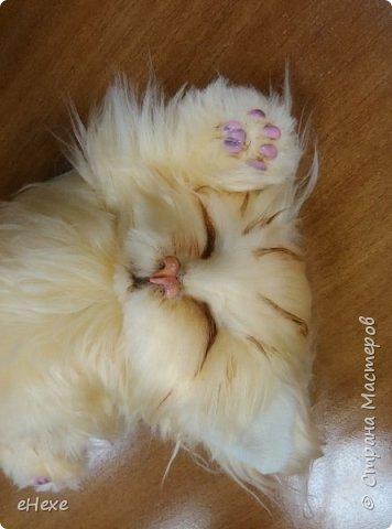 Спящий котёнок фото 1