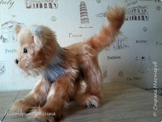 Котенок Колосок фото 3