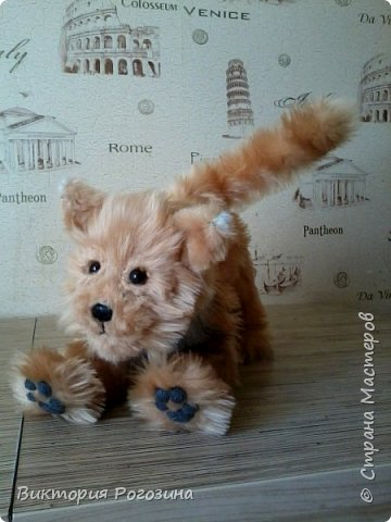 Котенок Колосок фото 4