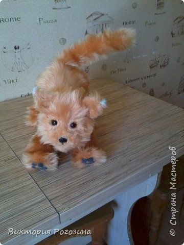 Котенок Колосок фото 5