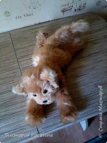Котенок Колосок фото 8
