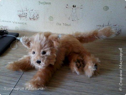 Котенок Колосок фото 9