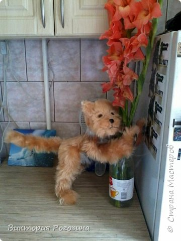 Котенок Колосок фото 10
