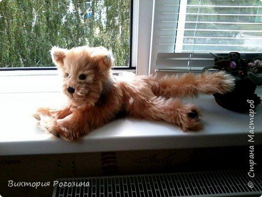 Котенок Колосок фото 11