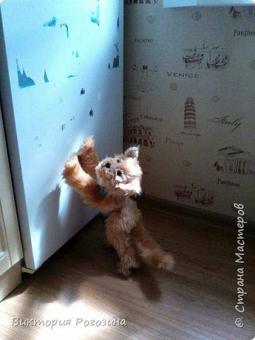 Котенок Колосок фото 14