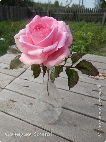 роза из супер тонкого фоамирана фото 5