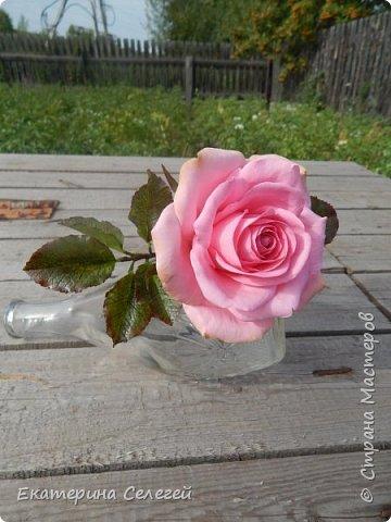 роза из супер тонкого фоамирана фото 4