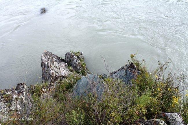 Всем здравствуйте! Продолжаем путешествие. Мы приехали в Чемал и сразу на мой любимый берег. Мы всегда по приезду приходим на берег Катуни и перед отъездом мы тоже всегда с ним прощаемся. А сегодня я пришла с ним поздороваться. фото 25