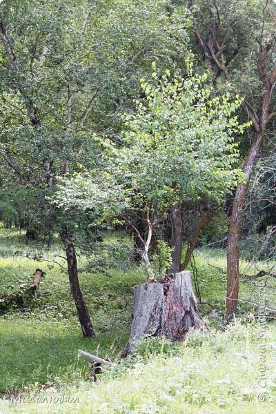 Возвращаемся назад в Онгудай а цивилизацию. фото 18