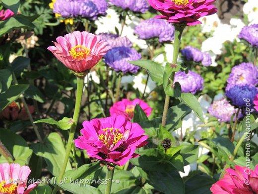 Цветочная фантазия фото 3