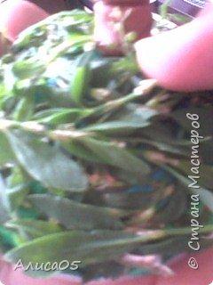 Всем привет! Я хочу показать,как сделать вот такой милый островок из травы и пластилина! Им можно украсить рабочий стол. фото 7