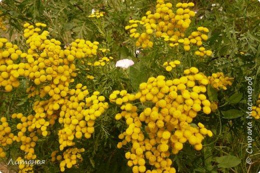 Белое в желтом. фото 1
