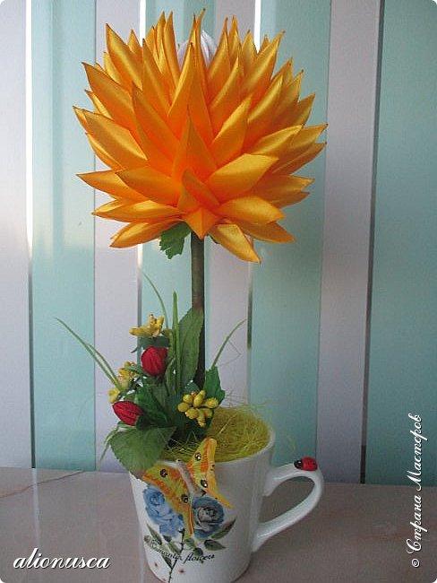 Focul florii inflorite фото 1