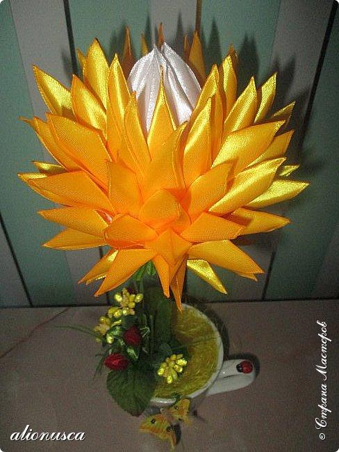 Focul florii inflorite фото 3