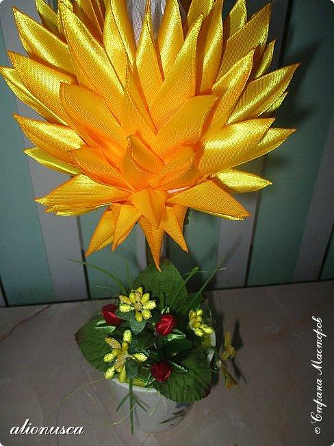 Focul florii inflorite фото 4