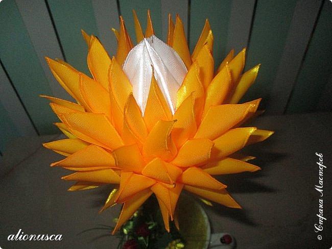 Focul florii inflorite фото 6