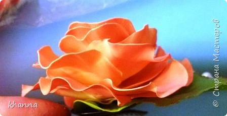 Анемон. Тонировка - постепенный переход цветов. фото 5