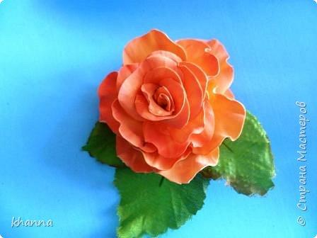 Анемон. Тонировка - постепенный переход цветов. фото 3