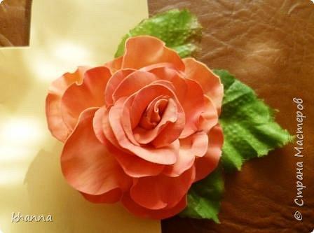 Анемон. Тонировка - постепенный переход цветов. фото 4