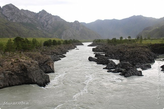 Всем здравствуйте! Продолжаем путешествие. Мы приехали в Чемал и сразу на мой любимый берег. Мы всегда по приезду приходим на берег Катуни и перед отъездом мы тоже всегда с ним прощаемся. А сегодня я пришла с ним поздороваться. фото 58