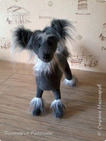 Японская хохлатая собачка фото 1