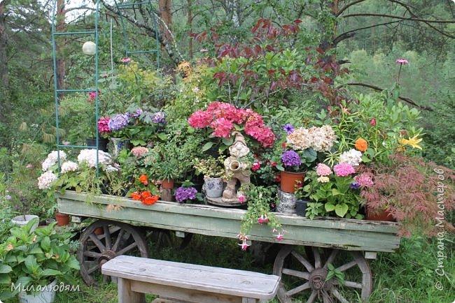 """Всем здравствуйте! Продолжаем наше путешествие. И сегодня мы направляемся в """"Сад пионов"""". Очень уютное и красивое место. И моя любимая гортензия. фото 3"""