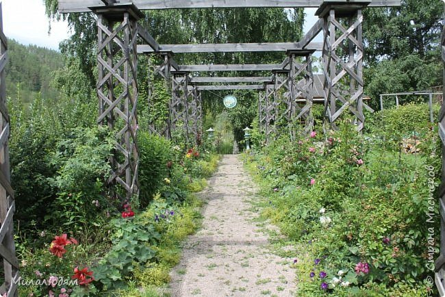 """Всем здравствуйте! Продолжаем наше путешествие. И сегодня мы направляемся в """"Сад пионов"""". Очень уютное и красивое место. И моя любимая гортензия. фото 34"""