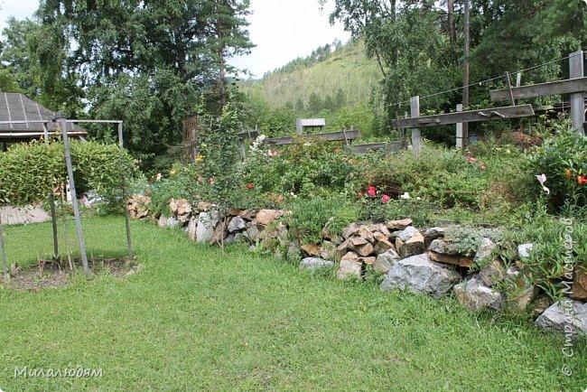"""Всем здравствуйте! Продолжаем наше путешествие. И сегодня мы направляемся в """"Сад пионов"""". Очень уютное и красивое место. И моя любимая гортензия. фото 39"""