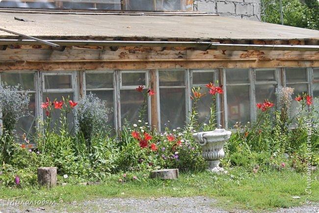 """Всем здравствуйте! Продолжаем наше путешествие. И сегодня мы направляемся в """"Сад пионов"""". Очень уютное и красивое место. И моя любимая гортензия. фото 44"""