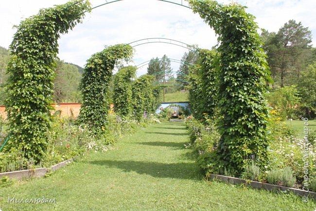"""Всем здравствуйте! Продолжаем наше путешествие. И сегодня мы направляемся в """"Сад пионов"""". Очень уютное и красивое место. И моя любимая гортензия. фото 54"""