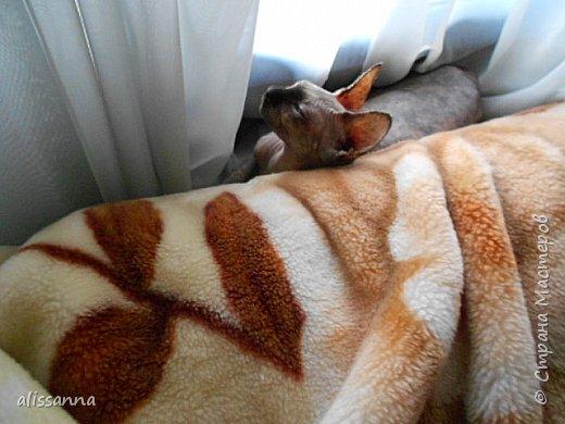 Доброе время суток...жители Страны....разбирала фотографии и обнаружила вот такие...))))) интересные существа эти животные...в интернете много подобных фоток...но энто чужие....))))))))))) а здесь своя....родненькая....))))))  Обычно мы мерзнем и ныкаемся под какую-нибудь одеялку))))))) ....но сейчас  у нас лето и можно погреться....)))))))) фото 13