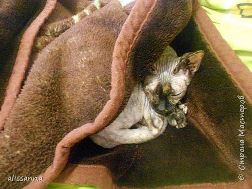 Доброе время суток...жители Страны....разбирала фотографии и обнаружила вот такие...))))) интересные существа эти животные...в интернете много подобных фоток...но энто чужие....))))))))))) а здесь своя....родненькая....))))))  Обычно мы мерзнем и ныкаемся под какую-нибудь одеялку))))))) ....но сейчас  у нас лето и можно погреться....)))))))) фото 15