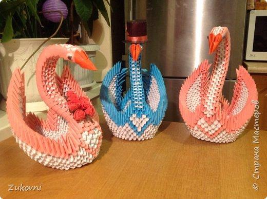 Мои прекрасные лебеди фото 4