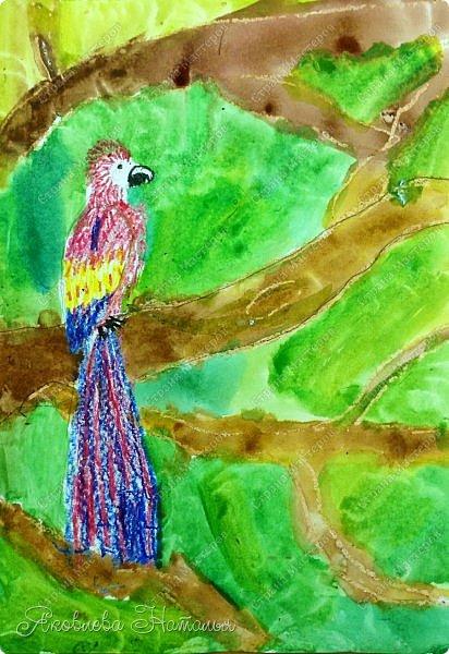 """Всем, здравствуйте!  Продолжаю рубрику """"Рисуем с детьми"""". На этот раз мы рисовали попугая на формате А-3, акварелью и восковыми мелками. Эскиз рисовали простым карандашом.  Ниже работы детей и несколько этапов фото 2"""