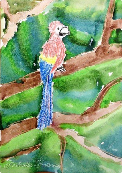 """Всем, здравствуйте!  Продолжаю рубрику """"Рисуем с детьми"""". На этот раз мы рисовали попугая на формате А-3, акварелью и восковыми мелками. Эскиз рисовали простым карандашом.  Ниже работы детей и несколько этапов фото 3"""