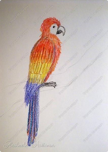 """Всем, здравствуйте!  Продолжаю рубрику """"Рисуем с детьми"""". На этот раз мы рисовали попугая на формате А-3, акварелью и восковыми мелками. Эскиз рисовали простым карандашом.  Ниже работы детей и несколько этапов фото 10"""
