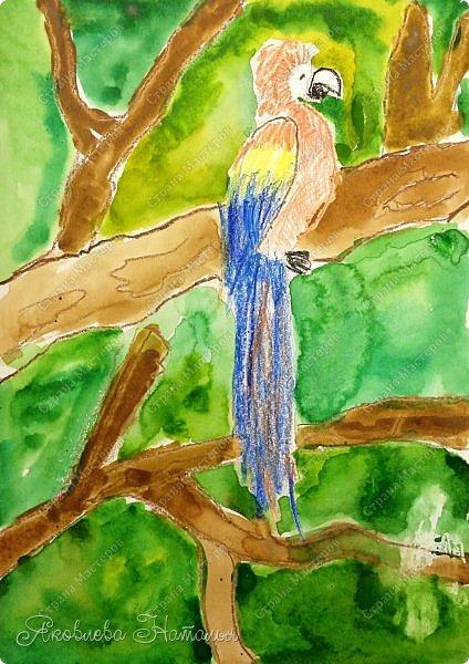 """Всем, здравствуйте!  Продолжаю рубрику """"Рисуем с детьми"""". На этот раз мы рисовали попугая на формате А-3, акварелью и восковыми мелками. Эскиз рисовали простым карандашом.  Ниже работы детей и несколько этапов фото 5"""