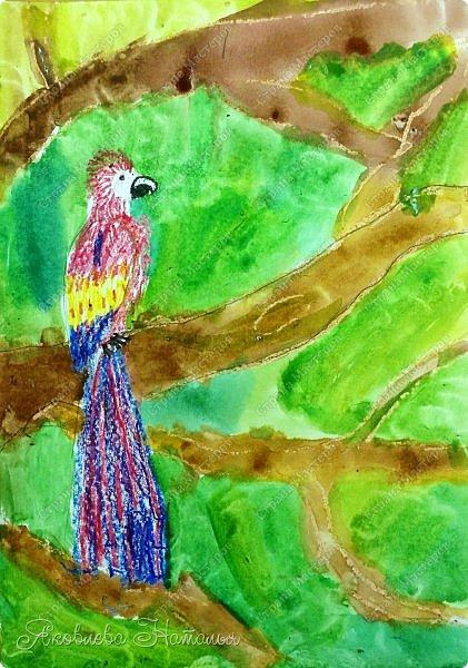 """Всем, здравствуйте!  Продолжаю рубрику """"Рисуем с детьми"""". На этот раз мы рисовали попугая на формате А-3, акварелью и восковыми мелками. Эскиз рисовали простым карандашом.  Ниже работы детей и несколько этапов фото 6"""