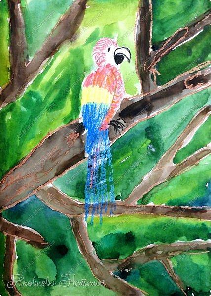 """Всем, здравствуйте!  Продолжаю рубрику """"Рисуем с детьми"""". На этот раз мы рисовали попугая на формате А-3, акварелью и восковыми мелками. Эскиз рисовали простым карандашом.  Ниже работы детей и несколько этапов фото 4"""